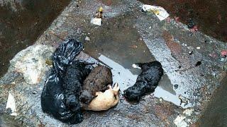Спасение новорожденных щенков!Как кормить новорожденных щенят?