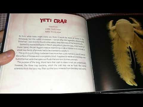 Reading Aloud: World's Weirdest Animals: Yeti Crab (British Female)