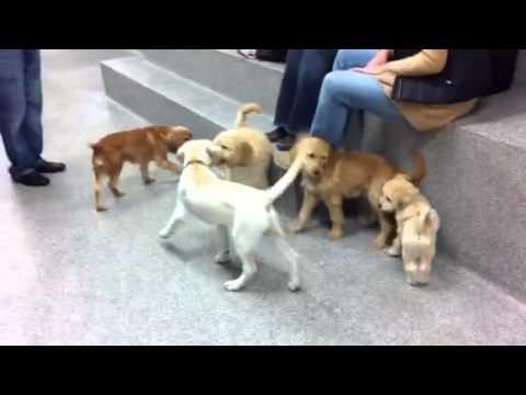 Good Dog DC's Puppy Kindergarten!