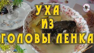Уха из головы. Как сварить уху из головы ленка, форели, хариуса или лосося. Petr de Cril
