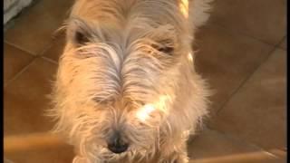 Cairn Terrier (sissie), Cairn Hole.avi