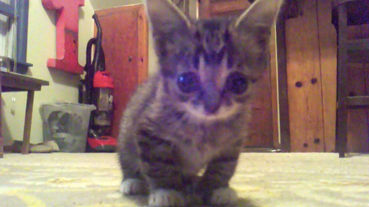 FOUND FOOTAGE of an 8 Week Old Baby BUB
