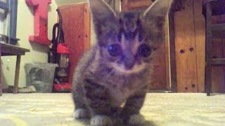 FOUND FOOTAGE of an 8 Week Old Baby BUB thumbnail