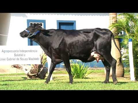 LOTE 40   0490AZ -   4º LEILÃO FAMÍLIAS - DOMINGO, 13 DE JUNHO, 10HS - REMATEWEB PLUS