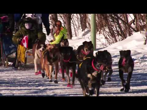 Iditarod 2017 - Dogs Just Want To Have Fun!