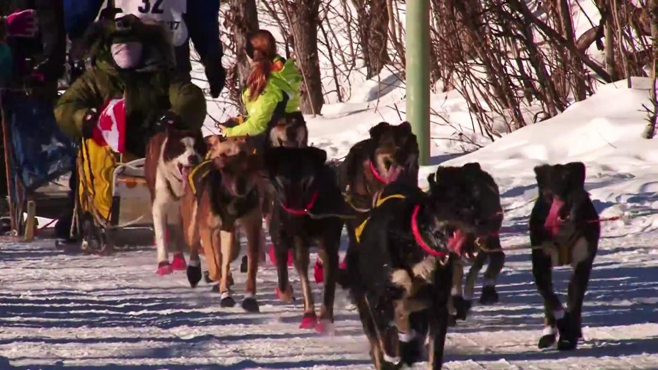 dog sledding video - 720×405