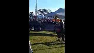 Royal Canin Dog Show Best Of Breed Competition