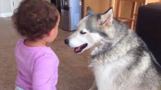 Try Not To Laugh At This Funny Dog Video Compilation | Funny Pet ...