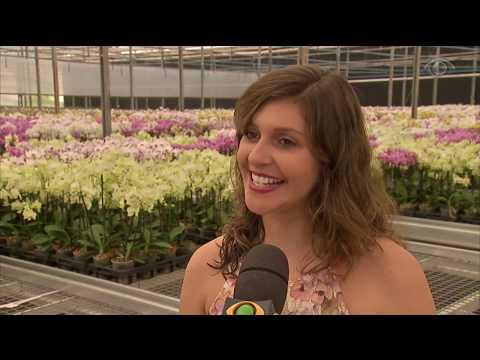 Mercado De Flores Espera Vendas Altas No Dia Das Mães