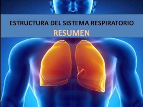 Estructura del sistema respiratorio - Resumen