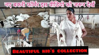 Beautiful goat kid's collection by khushboo goat farm