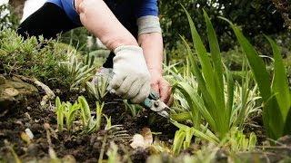 Садовые инструменты для прополки. GuberniaTV(Сейчас существует множество инструментов, с помощью которых процесс прополки можно существенно облегчить...., 2014-04-24T06:27:17.000Z)