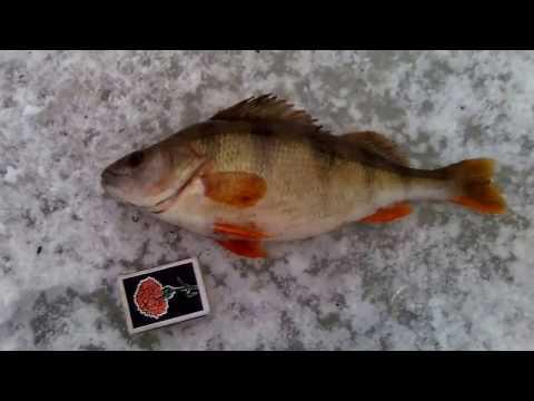 видео рыбалка на косынку с лодки