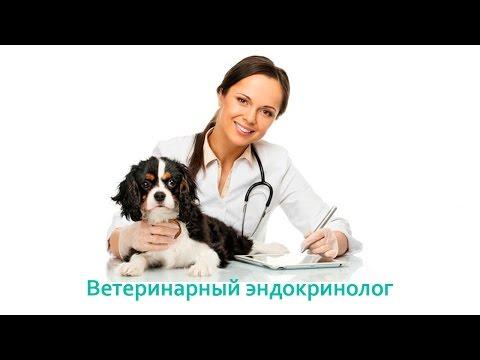 Ветеринарный эндокринолог. Ветеринарная клиника Био-Вет.