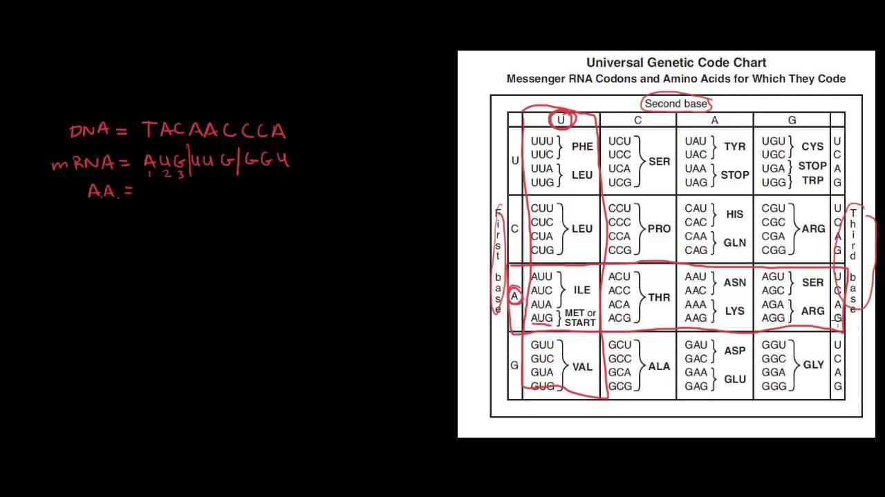 Genetics 6 Universal Genetic Code Chart
