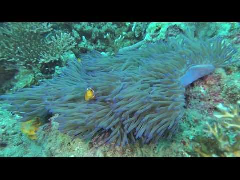 Tioman Dive Trip 15-16 Oct 2016 with Simplyscuba Singapore
