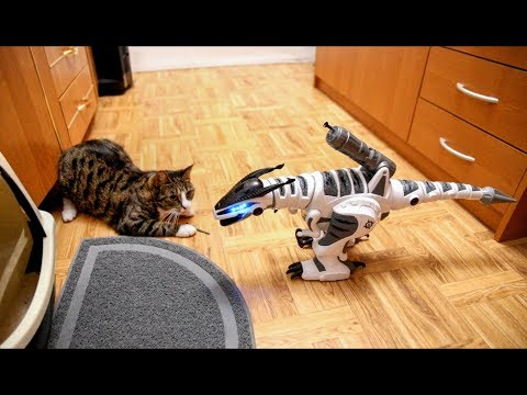 Cats Are Playing With RC Dinosaur