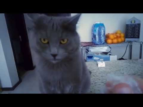 Cat Reacts To Crinkling Plastic Wrapper & It's Hilarious