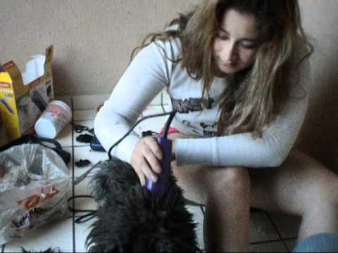 corte de pelo a un perro