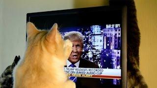 テレビに向かって全力攻撃する猫、その標的にはあの人の顔が