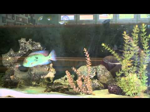 Fish House: Rusty Wessel's Aquatic Playland With A Home Built For Fish And Ponds A Plenty.