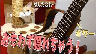 初めてギターを見る猫たちの反応が面白すぎたwwww thumbnail
