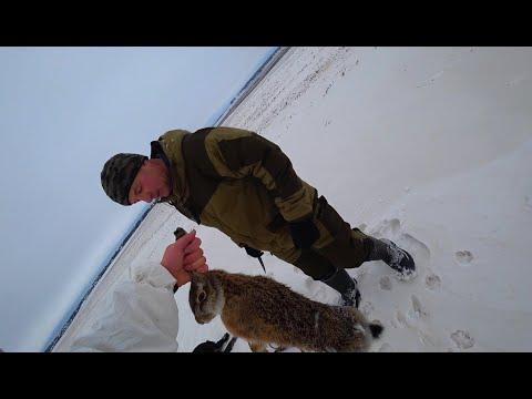 Охота на Зайца (ВЫСТРЕЛЫ, АЗАРТ, ПОГОНЯ)