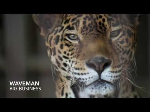 Drake ~ Waveman / Big Business (Ft. 21 Savage)