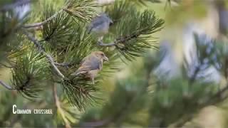Birdwatching in Cyprus, Winter
