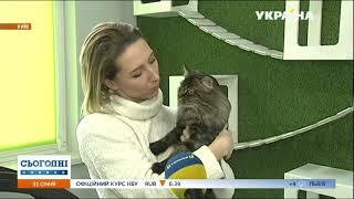 Уникальный отель для котов. Комментарий зоопсихолога Сергея Клочко на телеканале Украина.