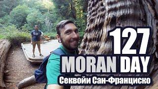 Moran Day 127 - Секвойи Сан-Франциско