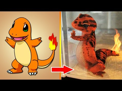 Pokemon In Real Life 2018 And Pokemon Anime - All Characters| Part 2