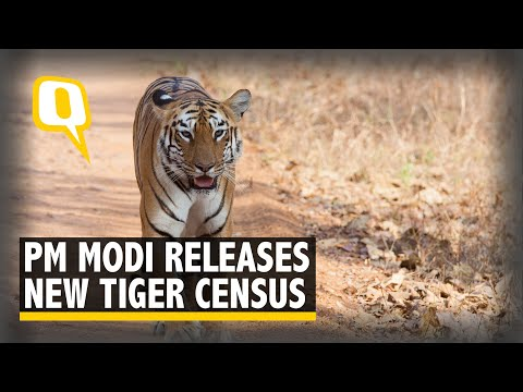 World Tiger Day: PM Modi Releases New Tiger Census