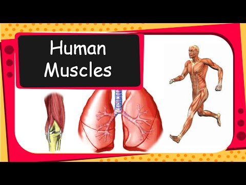 Science - Human Muscular System, Tendons and Health of Bone and ...