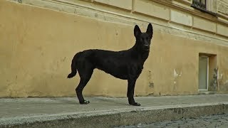 10 HOURS LITTLE BIG SKIBIDI - DOG DANCE VERSION / 10 ЧАСОВ СКИБИДИ - ПЕС ТАНЦУЕТ