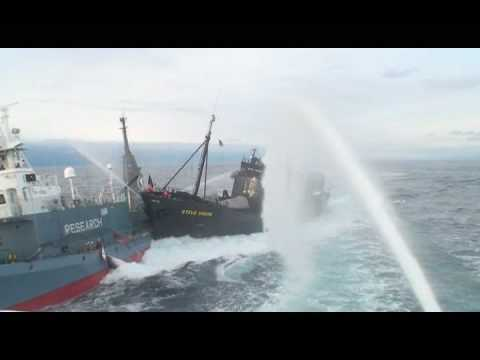 greenpeace boat steve irwin rams japanese research vessel