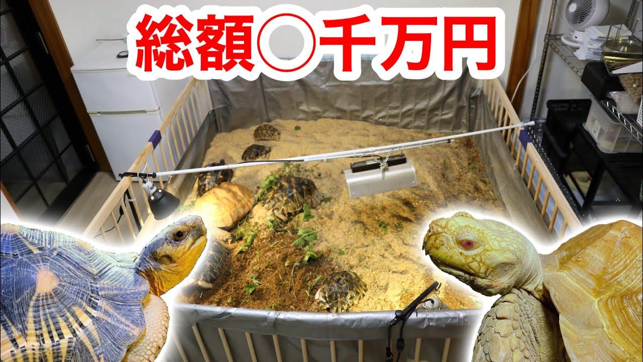 総額○千万円…!?金持ちリクガメマニアの家がヤバ過ぎた