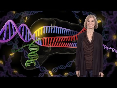 Jennifer Doudna (UC Berkeley / HHMI): Genome Engineering with CRISPR-Cas9