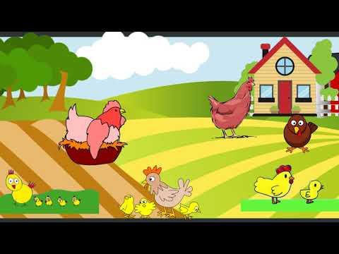 الدجاجة و حبة القمح _ قصة للاقسام التحضيرية