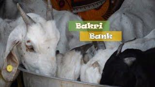 Bakri (Goat) Bank