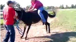Bucking Mule/Donkey/Horse/Pony. Bucked off!