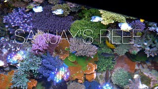 Sanjay Reef Trailer
