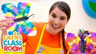 Caitie's Classroom Live - Butterflies!
