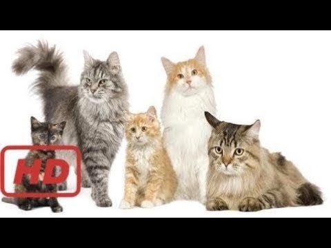 The Secret Life of Cats || Full Documentary with subtitles