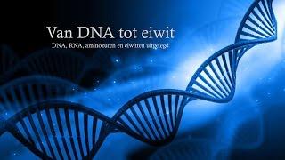 Van DNA tot eiwit (havo/vwo)