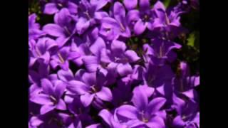 มนต์รักดอกคำใต้..รวมดาวแซม..โอ
