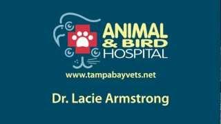 Tampa Veterinarian - Meet Dr. Lacie Armstong at Terrace Animal Hospital
