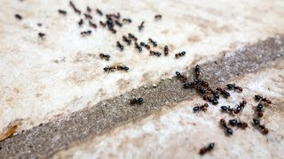 6 Ways To Get Rid Of Ants Without Using Pesticide - Gardening Tips