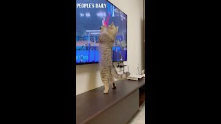 The Olympics are also attractive to our furry audience.
