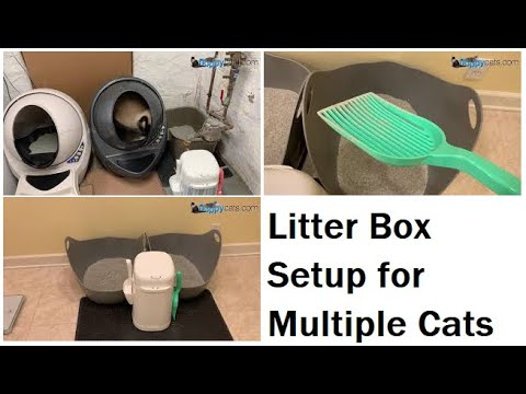 Litter Box Setup For Multiple Cats: LR3, LitterLocker And NVR Miss - Floppycats